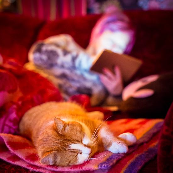 Die Rote Katze und ich auf dem Sofa