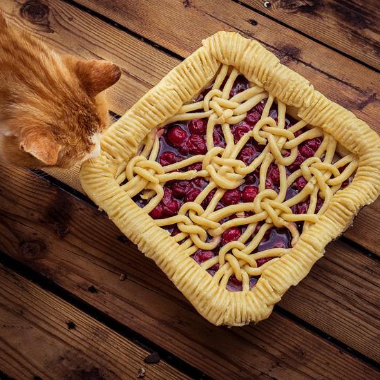 Die Rote Katze mag Fischkuchen mehr als Kirschkuchen