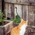 Die Rote Katze und der Regen