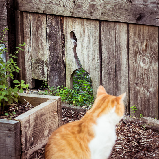 Die Rote Katze hat jetzt ihren eigenen Eingang bei uns im Zaun