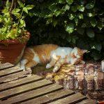 Die Rote Katze