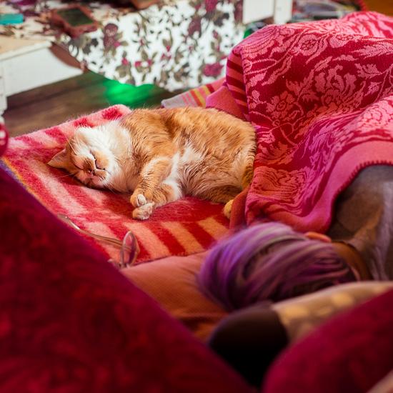"""Die Rote Katze und ich machen ein kleines """"Cat Nap""""-Nickerchen"""